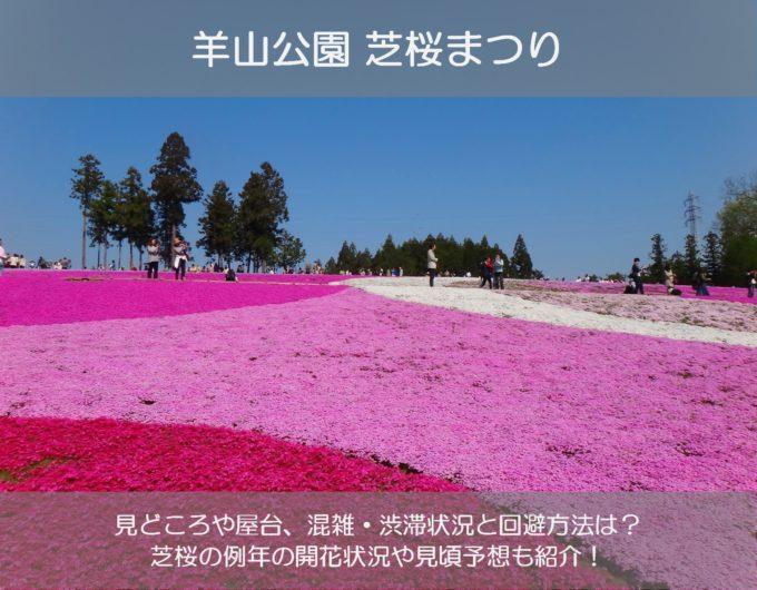 羊山公園芝桜まつり2019の屋台や混雑状況は?芝桜の見頃や開花状況も紹介!